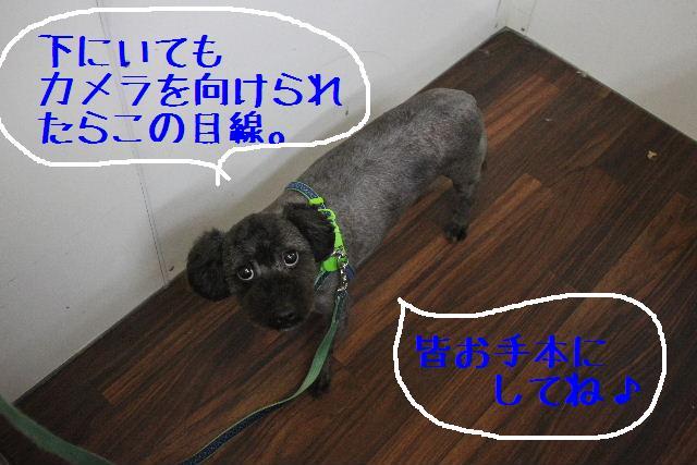 b0130018_2310277.jpg