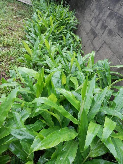 梅雨本番です。_a0125419_649992.jpg