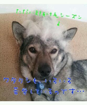 b0207320_13341464.jpg