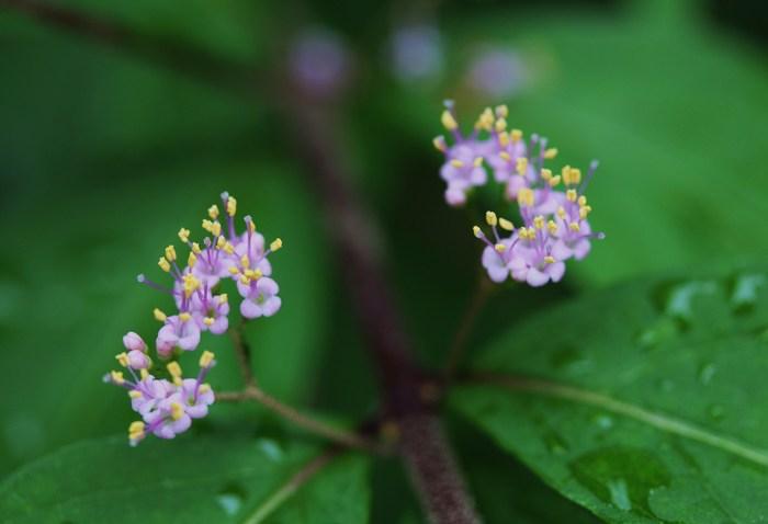 庭の小さな花 & 魅力的な葉色_d0150720_12554581.jpg
