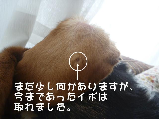 c0166622_11164365.jpg