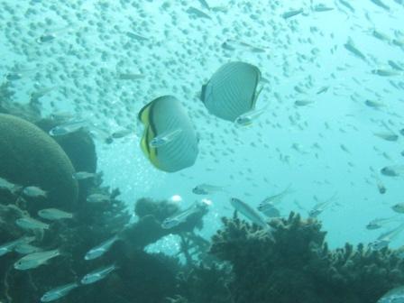 石垣島らしい海を♪_a0189838_17103427.jpg