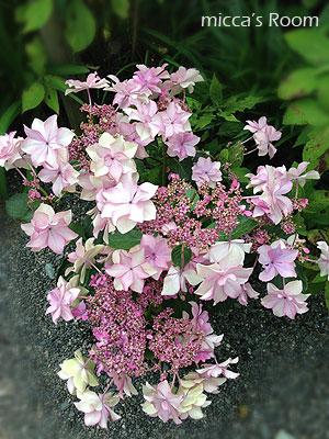 紫陽花を観に極楽寺と本勝寺へ_b0245038_7454686.jpg