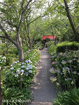 紫陽花を観に極楽寺と本勝寺へ_b0245038_7454862.jpg