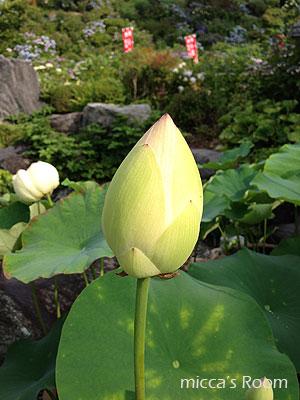 紫陽花を観に極楽寺と本勝寺へ_b0245038_7455391.jpg