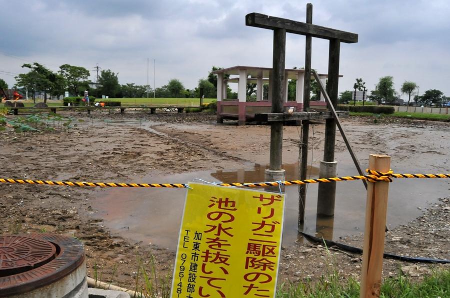 平池公園・その他_d0148541_20414913.jpg