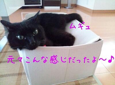 d0170555_2012965.jpg