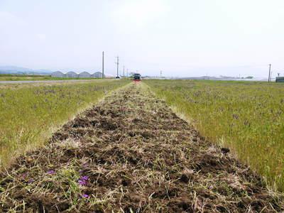 砂田米 今年も田植えが始まりました!その1(土作り~代かきまで)_a0254656_16565994.jpg