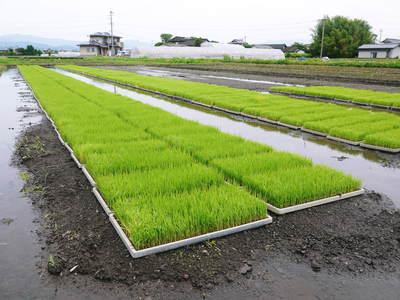 砂田米 今年も田植えが始まりました!その1(土作り~代かきまで)_a0254656_1782160.jpg