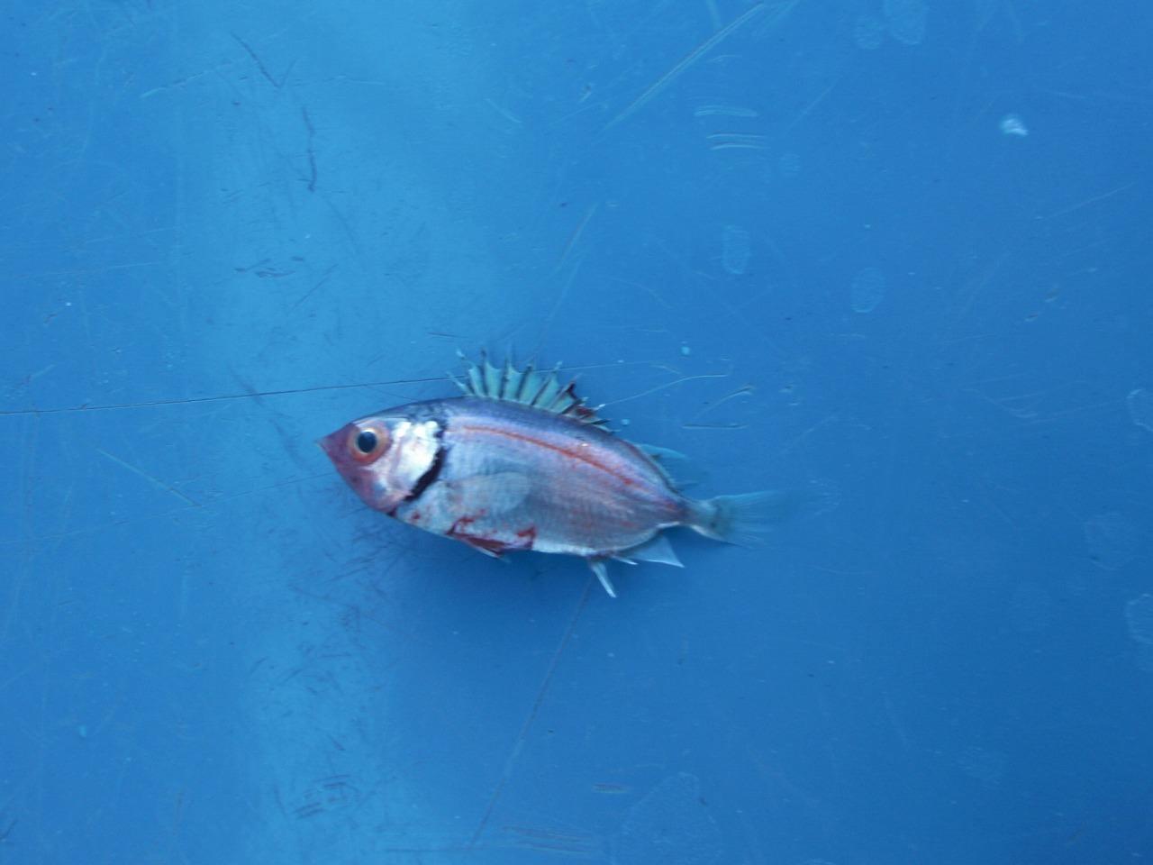 魚の中の魚_a0083861_12282717.jpg