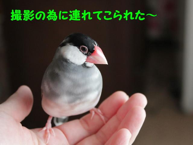 b0158061_20123980.jpg