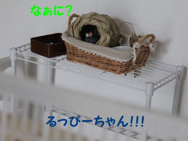 b0158061_20132483.jpg