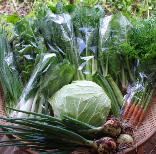 今週の野菜セット(6/25~6/29着)_c0110869_22155413.jpg