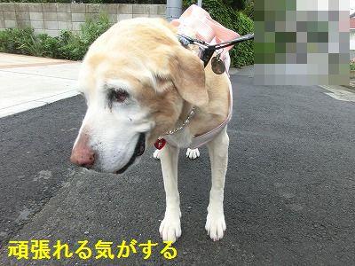 界隈ガイド第2弾_e0222588_1349518.jpg