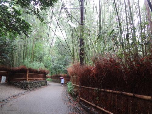 京都 嵐山 竹林_f0093292_1458284.jpg