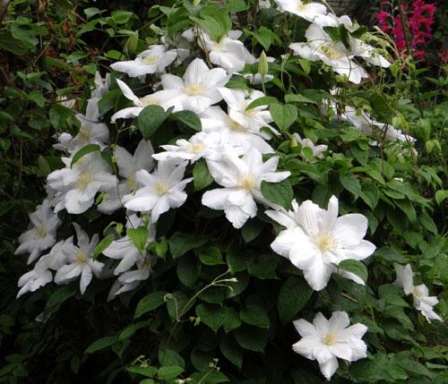 庭の古株二つと、楽しいもの二つ♪_a0136293_19154495.jpg