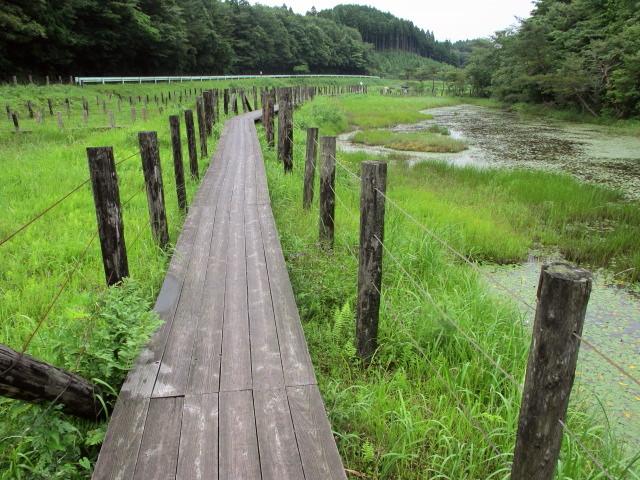 樫原(かしばる)湿原へ行った_c0036203_17591777.jpg