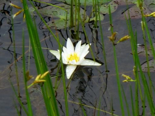 樫原(かしばる)湿原へ行った_c0036203_18543541.jpg