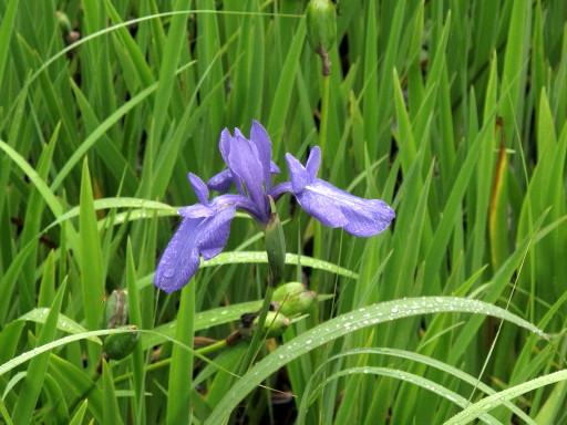 樫原(かしばる)湿原へ行った_c0036203_196197.jpg