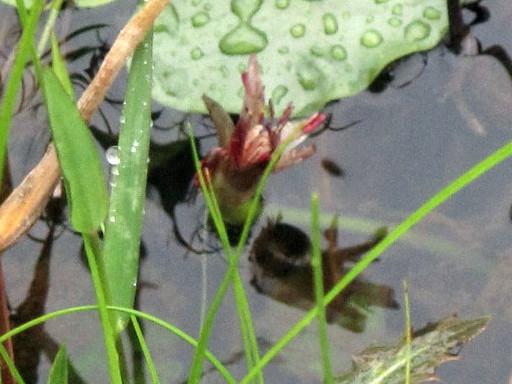 樫原(かしばる)湿原へ行った_c0036203_20295227.jpg