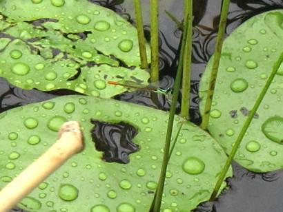 樫原(かしばる)湿原へ行った_c0036203_20385688.jpg