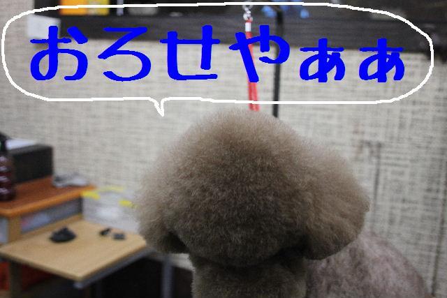 b0130018_1074498.jpg