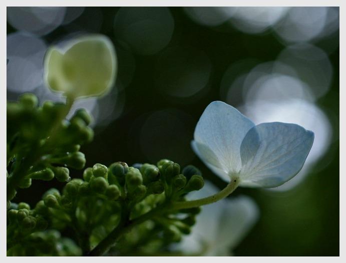 ■ 開花がおそい_b0148920_18332861.jpg