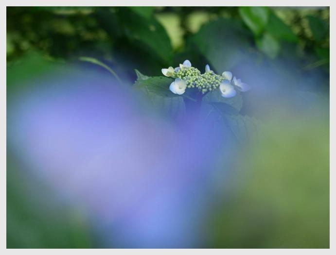 ■ 開花がおそい_b0148920_18334450.jpg