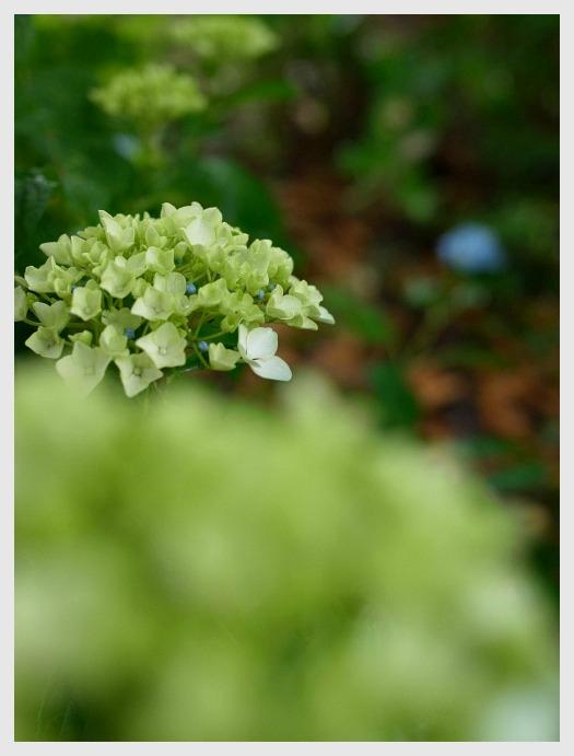■ 開花がおそい_b0148920_1834088.jpg