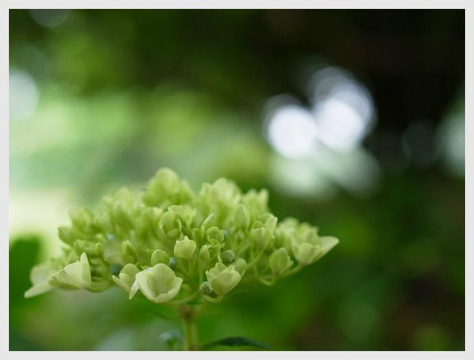 ■ 開花がおそい_b0148920_18343116.jpg