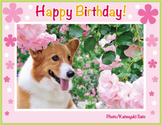 のんのんちゃん、お誕生日おめでとう♪_d0102523_11574395.jpg