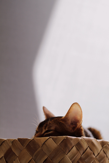 [猫的]Untitled series_e0090124_2364062.jpg