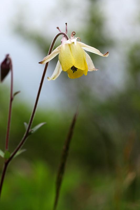 飯盛山の初夏の植物_b0179231_2225453.jpg