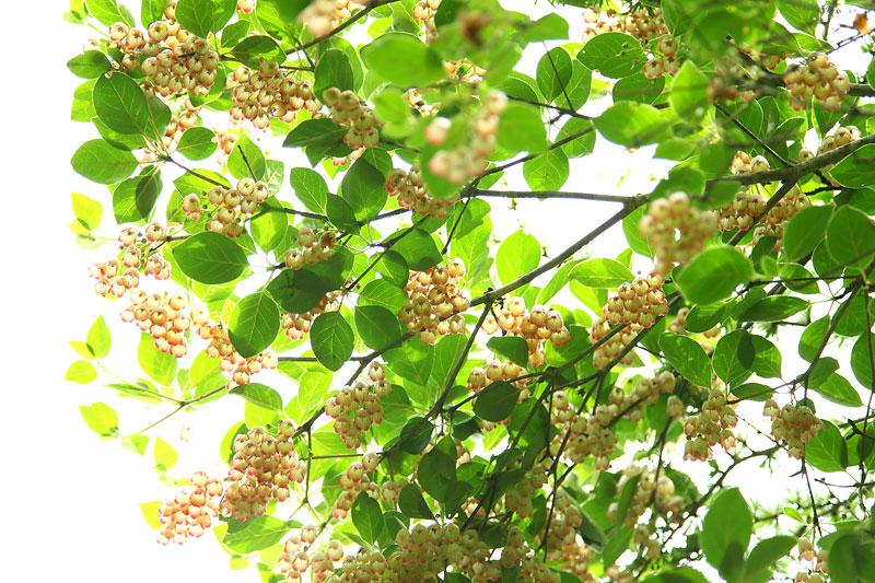 飯盛山の初夏の植物_b0179231_2231540.jpg