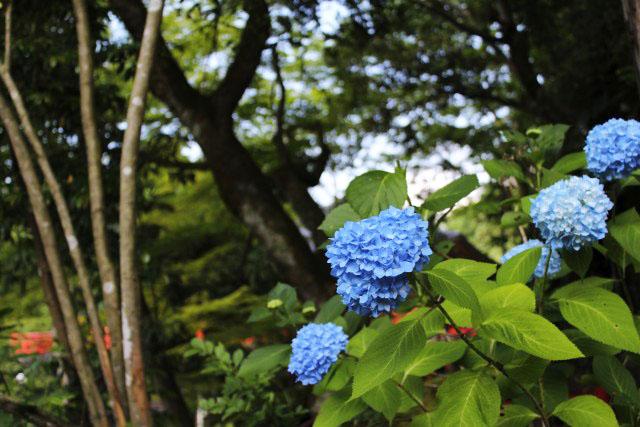 中山登山_b0132338_10145937.jpg