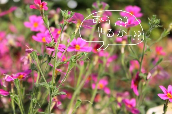 f0220152_18494474.jpg