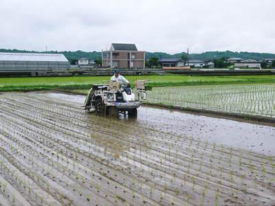 砂田米 今年も田植えが始まりました!その2(この1株1株が大きく実るとばい!)_a0254656_17405036.jpg