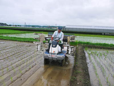砂田米 今年も田植えが始まりました!その2(この1株1株が大きく実るとばい!)_a0254656_17483140.jpg