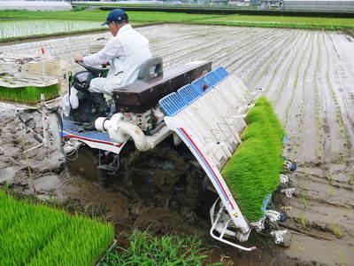 砂田米 今年も田植えが始まりました!その2(この1株1株が大きく実るとばい!)_a0254656_17515614.jpg