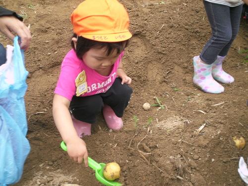 未就園児親子登園 じゃがいも掘り_b0277979_1916954.jpg