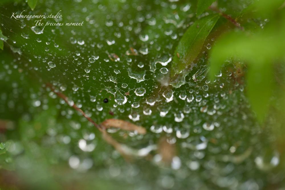 梅雨に打たれて緑増す_c0137403_13563169.jpg