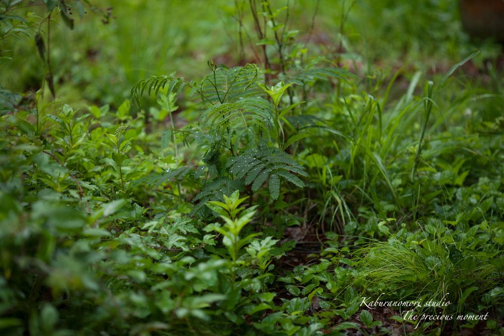梅雨に打たれて緑増す_c0137403_13565699.jpg