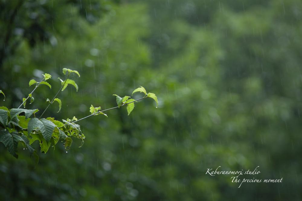 梅雨に打たれて緑増す_c0137403_13575066.jpg