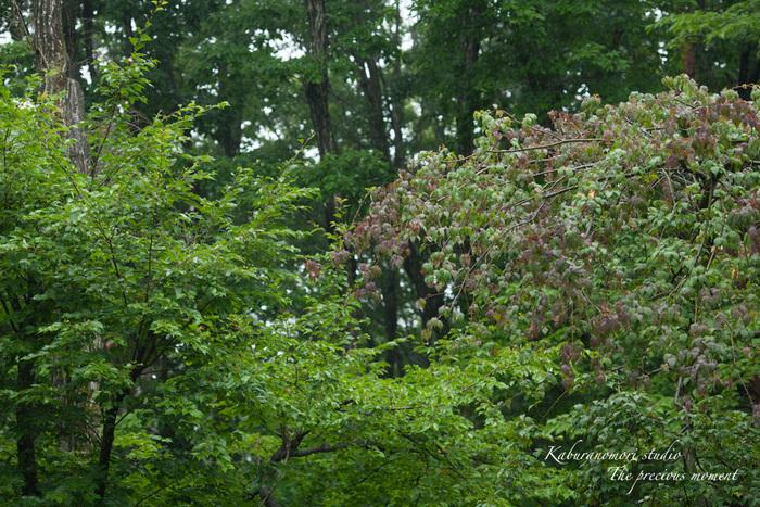 梅雨に打たれて緑増す_c0137403_13585633.jpg