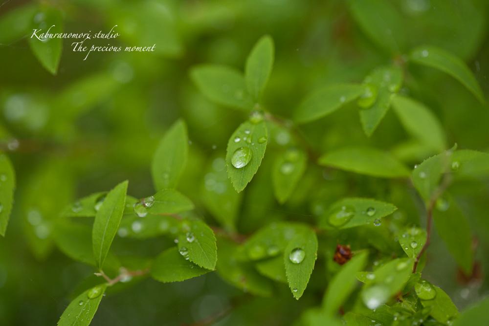 梅雨に打たれて緑増す_c0137403_1359411.jpg