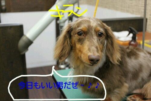 b0130018_2313432.jpg