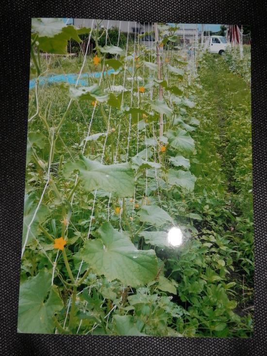 自然栽培「無農薬」野菜が。_a0125419_15112090.jpg