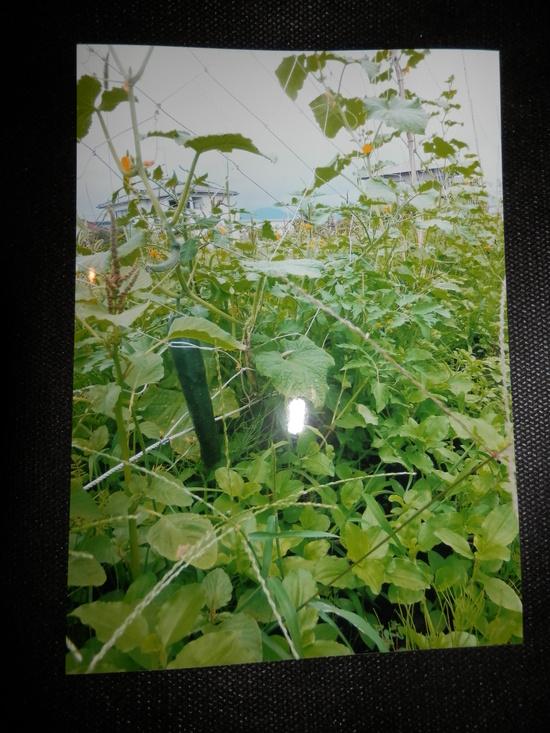自然栽培「無農薬」野菜が。_a0125419_1513284.jpg