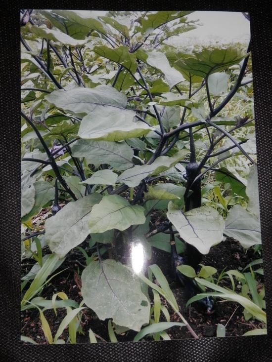 自然栽培「無農薬」野菜が。_a0125419_15145247.jpg