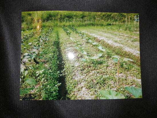自然栽培「無農薬」野菜が。_a0125419_15152782.jpg